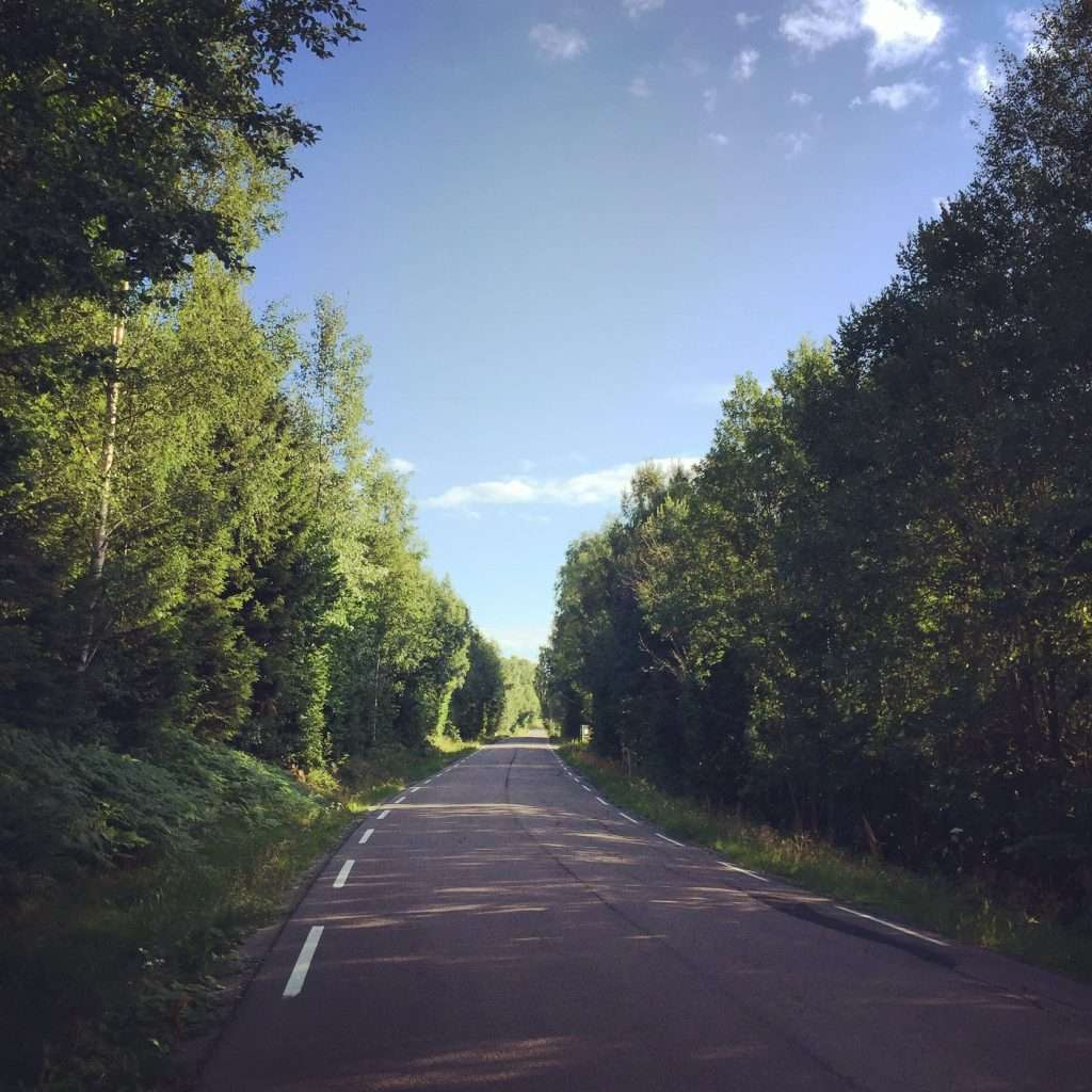 Road going through trees