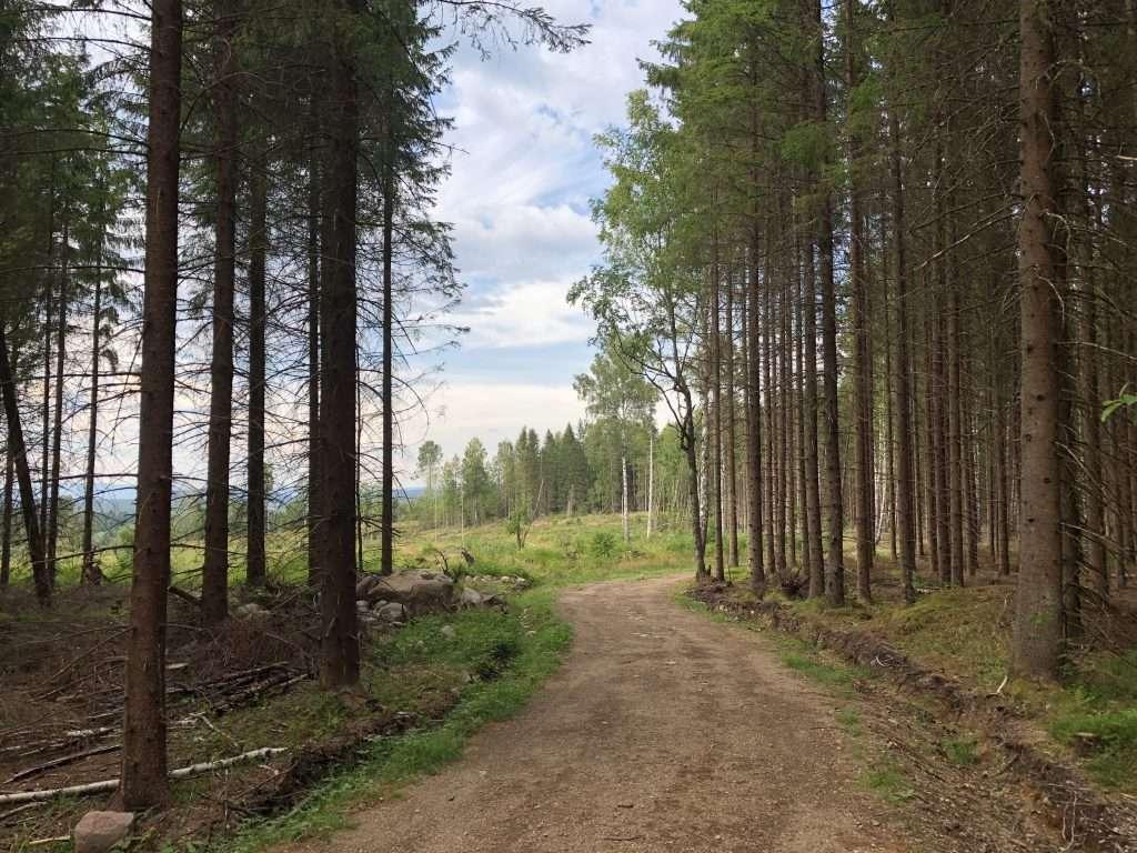 Trail running in Hebekkskogen, Nøstvedtmarka, Ski
